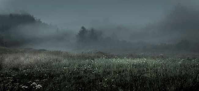 landscape photography of grass field covered with fogh