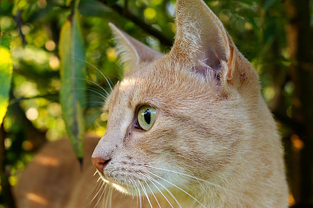 selective photography of orange tabby cat