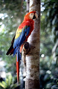 closeup photography of scarlet macaw perched on tree