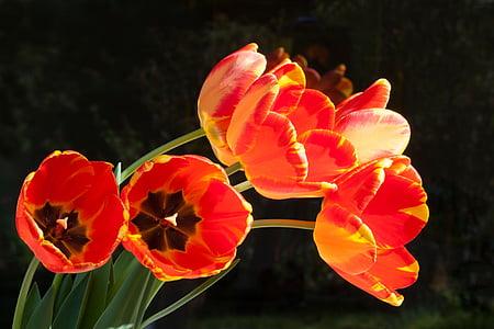 cred petaled flower