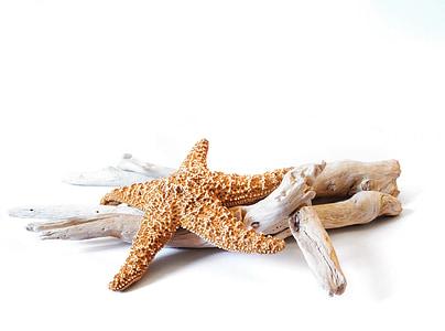 photo of brown starfish on beige driftwood