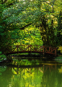 gray bridge under green trees