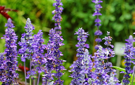 selective photo of purple petaled flowers