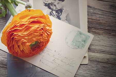 orange ranunculus on white paper