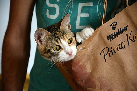 tabby cat inside a Tchibo paper bag held by a person