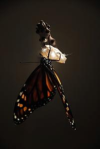 monarch butterfly on tree branch