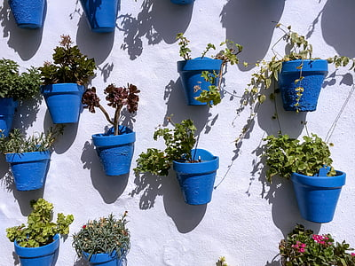 green leafed plants in blue pots on white wall