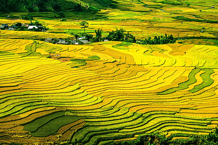 aerial photography of green rice field during daytime