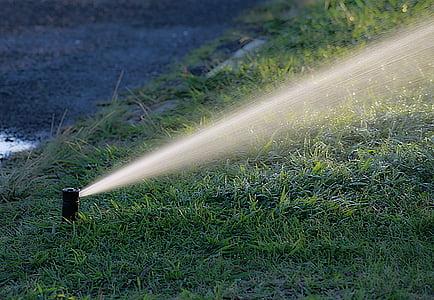 water hose on green grass