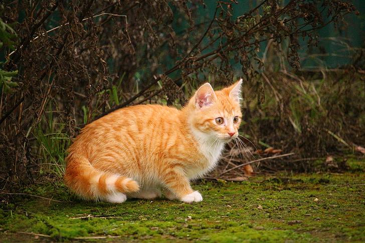 orange tabby kitten sitting on grass