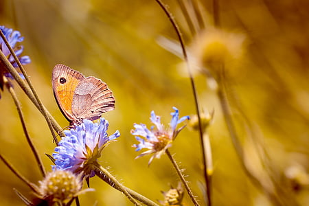 gray and orange butterfly perching on blue flowers