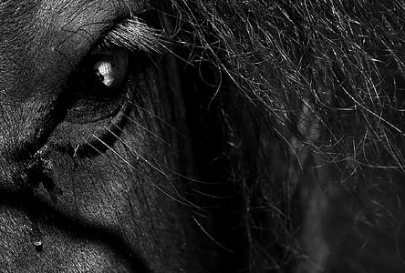 grayscale photography of animal's eye