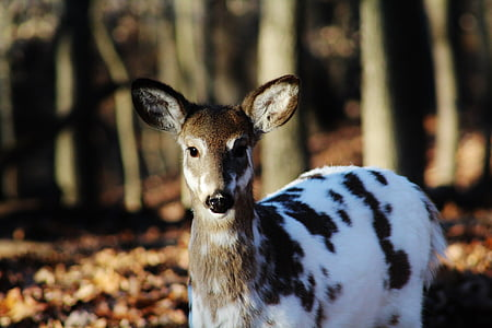 white and brown deer during daytime