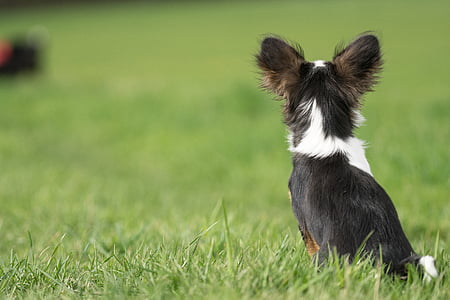short-coated black and white puppy on grass field on selective focus photo
