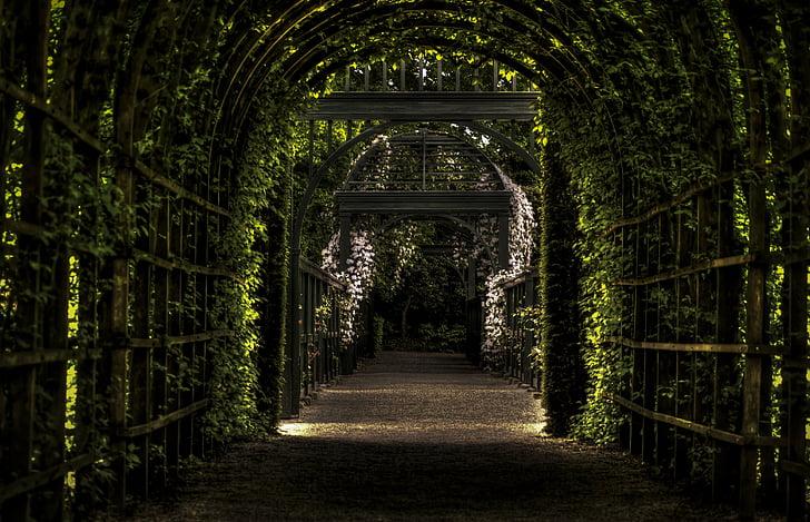 photo of plant pathway