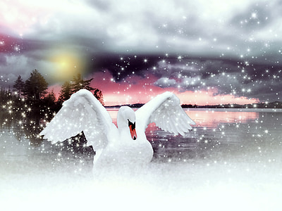 white swan on lake digital wallpaper