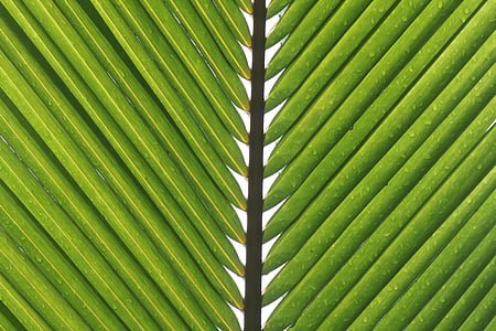 macro photography of palm tree leaves