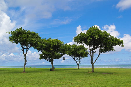 four green trees near seashore under blue sky during daytime