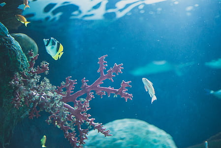 underwater photo of fish near coral