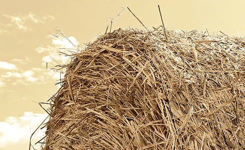 close up photography of hay