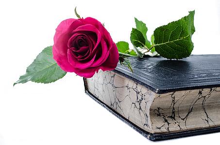 red rose flower on top of black hardbound book