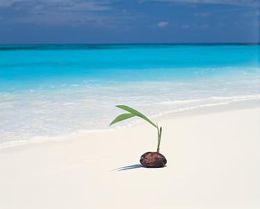 coconut seedlings near seashore