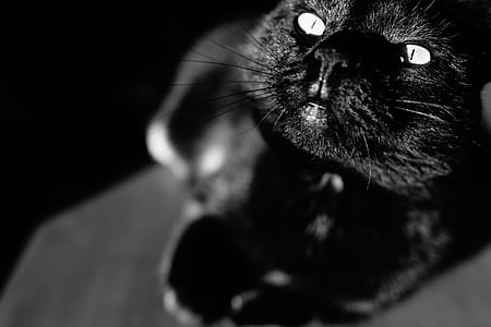 grayscale photography of resting cat