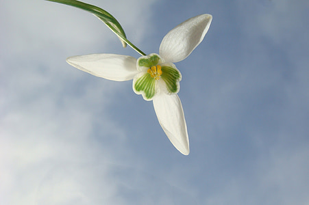 white snowdrop flower low-angle photography