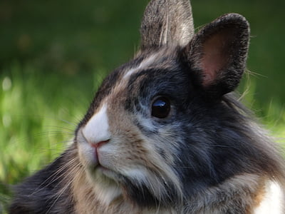 shallow focus photography of rabbit