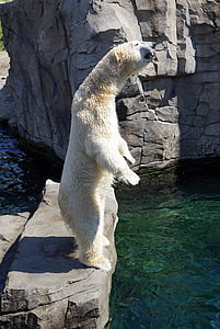 Polar bear standing on gray stone near body of water