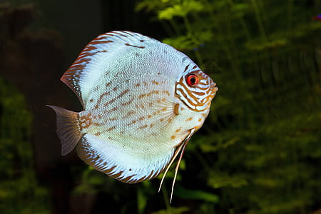 silver and brown fish