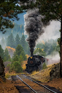 black train surrounded by trees