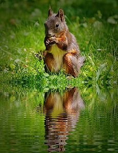 squirrel eating nut beside body of water