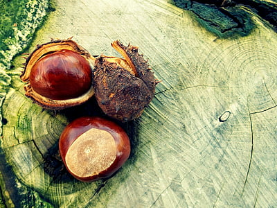 brown chestnuts on stump table