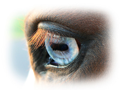 animal eye closeup photography
