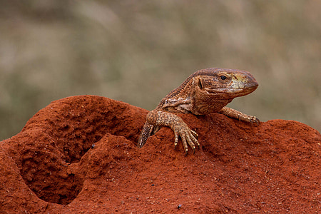 selective focus photography of brown reptile
