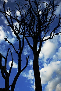 silhouette of withered tree under blue cloudy sky during daytime