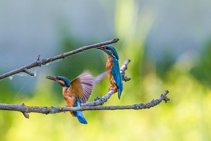 two hummingbirds on tree branch