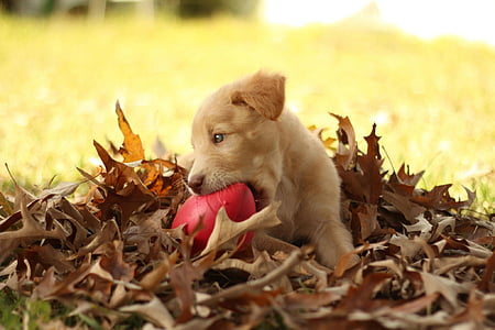 shallow focus photography of short-coated brown puppy
