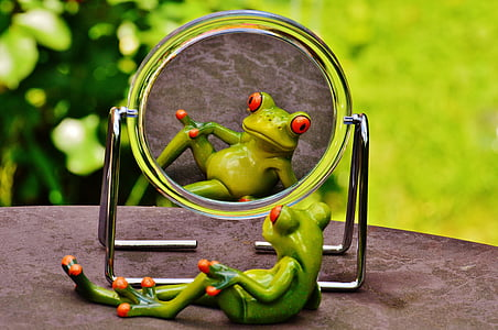 frog sitting in front of mirror
