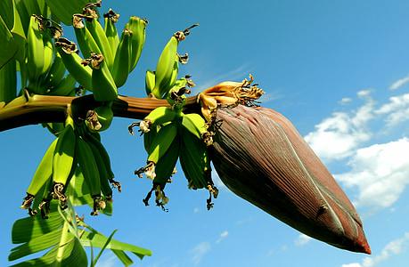 closeup photo of banana blossom