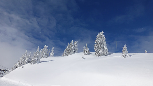 pine tree coated with snow on snow field