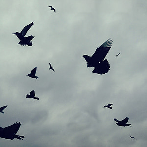 silhouette of flying doves under white clouds