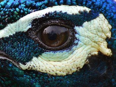 brown reptile eye