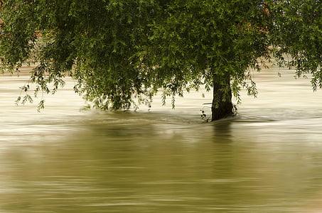 tree flooded with water