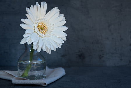 white daisy on clear glass vase