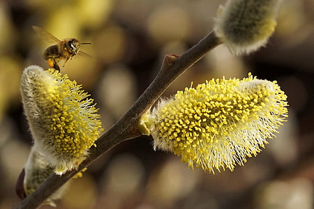 selective focus photo of brown bee pollinating on yellow flower bud