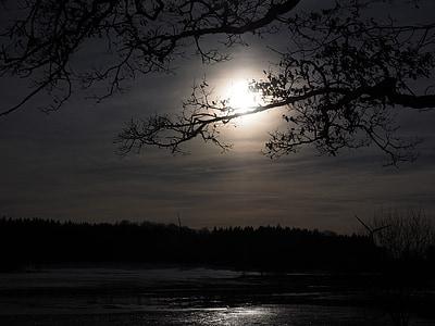 silhouette of trees near lake