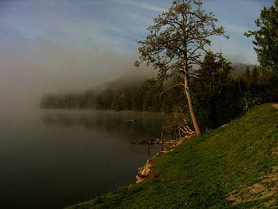 green trees and lake at daytime
