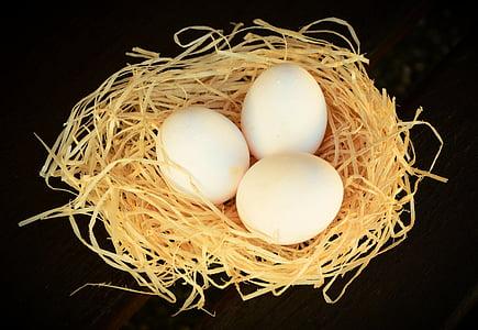three white eggs on nest against black background